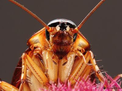Solo te separan 800 millones de años de una cucaracha