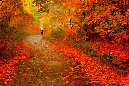 Fotografiar el otoño: algunos consejos e imágenes para inspirarse