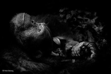 Contemplation Peter Delaney Wildlife Photographer Of The