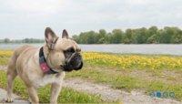 Tagg, el rastreador de mascotas de Qualcomm