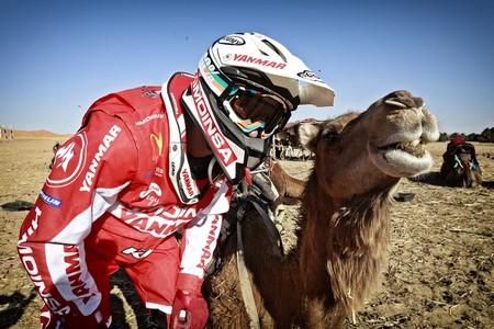 farres-camello