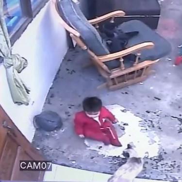 Animales protectores: una gata evita que un bebé se acerque a unas peligrosas escaleras en vídeo viral