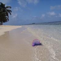 Todo lo que tienes que saber sobre las medusas y sus picaduras
