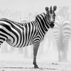 Foto 10 de 12 de la galería la-belleza-animal-en-blanco-y-negro en Xataka Foto