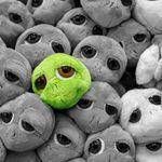 Cómo dejar un solo objeto de color en una foto en blanco y negro