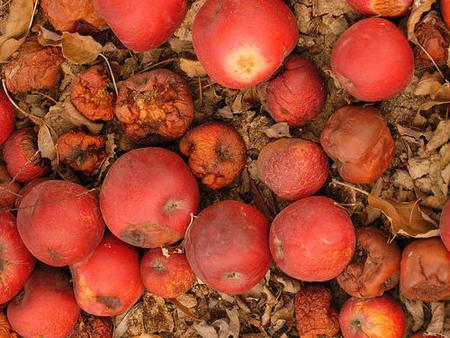 Manzanas podridas