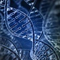Un 8% del ADN humano está formado por restos de virus