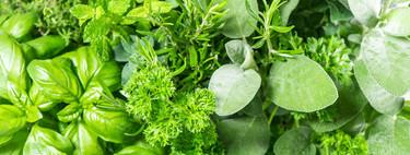 Llena de verde tu cocina: consejos y utensilios para cultivar, conservar y cocinar con plantas aromáticas