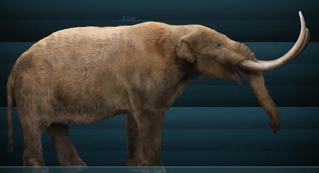 Encuentran en Cundinamarca restos fósiles de un mastodonte, que vivió hace 10 mil años