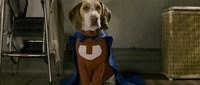 'Superdog', arf arf arf