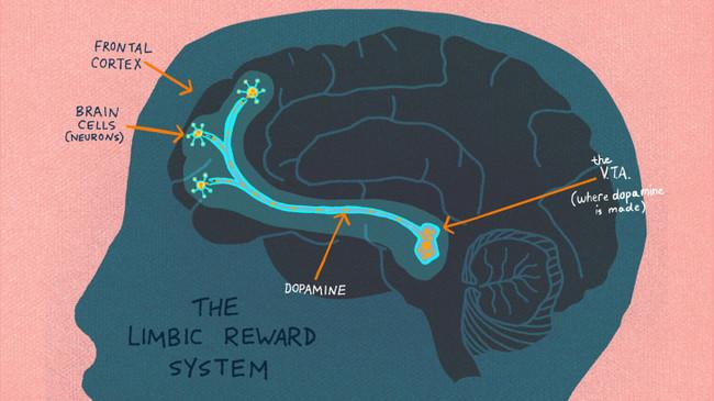 Brain Reward System 1 Wide 871d1a72b3ff1cbba4bd6a450478aa3897ee72bc
