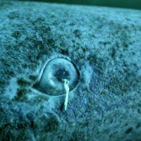 ¿Cómo podemos saber que un tiburón tiene 400 años?