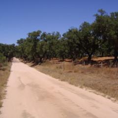 Foto 5 de 8 de la galería megalitos-del-alentejo en Diario del Viajero