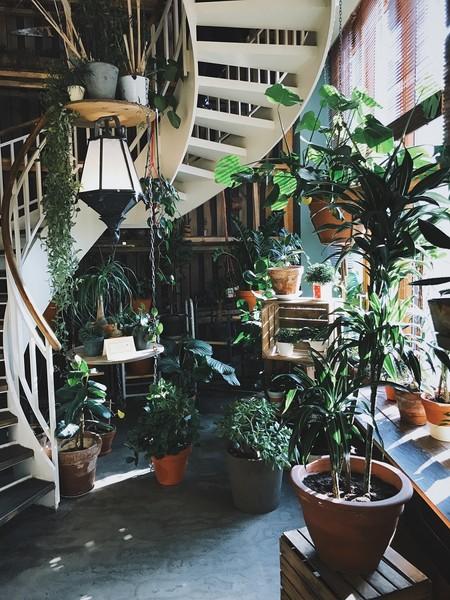 Regar plantas en vacaciones