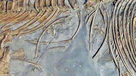 Fosil Completo Ictiosaurio 1057104342 9087400 660x371