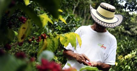 La cruda realidad de la lucha contra las drogas: cultivar coca es mucho más rentable que cultivar café