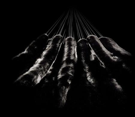 Sucumbí al placer de la hamaca en piel de zorro negro by Bless