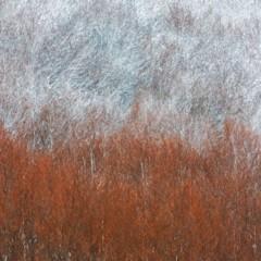 Foto 8 de 10 de la galería arte-en-la-naturaleza en Xataka Foto