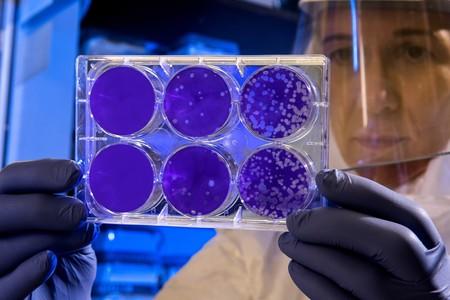 """""""El primero"""" de los secretos de la metástasis del cáncer al descubierto: no se produce por las mutaciones"""
