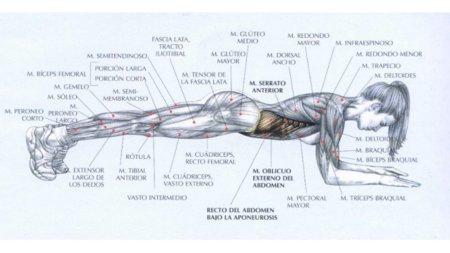 abdominal-isometrico