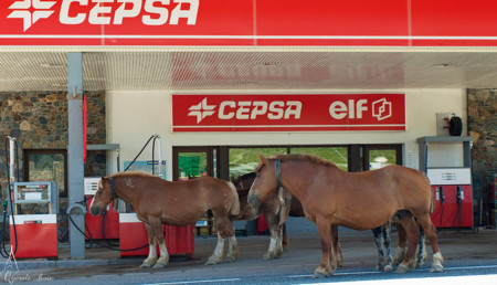 Caballos Gasolinera