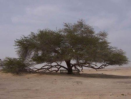 El árbol De La Vida El árbol Más Solitario Y Aislado Del Planeta