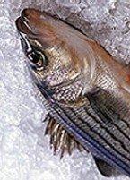 ¿Es seguro congelar de nuevo un pescado ya descongelado?.