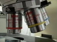 ¿Quién inventó el microscopio óptico?