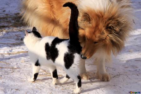 The Dog And Catimage From Torange Biz Free