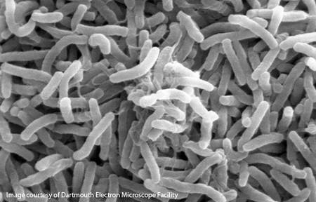 ¿Cuál es el microbio más abundante del planeta Tierra?