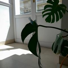 Foto 32 de 41 de la galería asus-zenfone-5-fotografias en Xataka