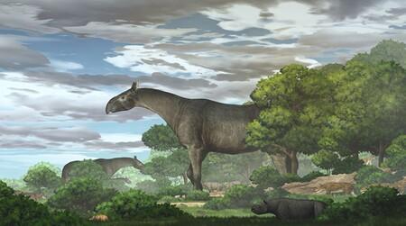 Fósiles de rinocerontes gigantes descubiertos en China muestran que eran más altos que las jirafas y pesaban 21 toneladas