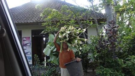 Mujer Batur