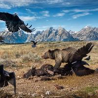 """Estas son las fotos ganadoras del """"2016 Wildlife Photographer of the Year"""""""