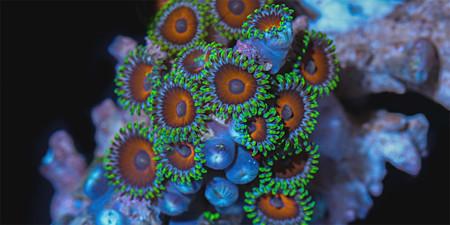 'Coral colors', un hipnótico timelapse de fotografía macro muestra la belleza de los corales