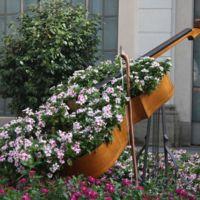 Un violonchelo