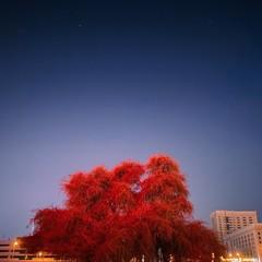 Foto 3 de 6 de la galería fotografias-ganadoras-del-reto-de-fotografia-nocturna-shotoniphone en Applesfera