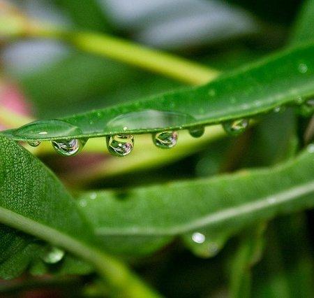plantas para luchar contra el acne