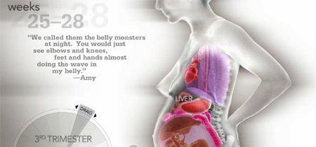 Así se desplazan los órganos de la madre en el embarazo para dejar lugar al bebé