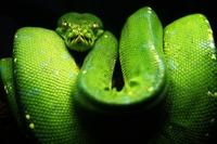 Cazadores de Mitos: Las propiedades privadas en Python