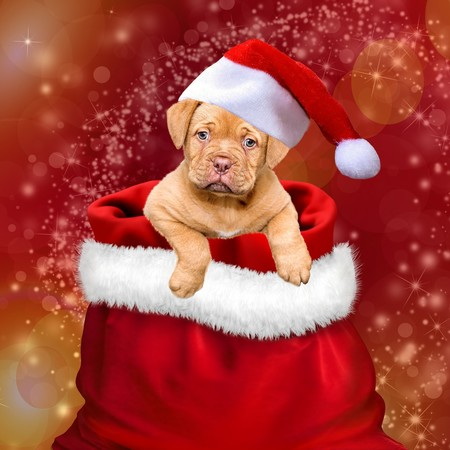 navidad cachorro