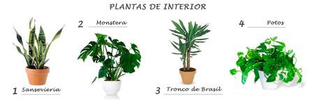 Okiiiiiiissssplantas De Interior