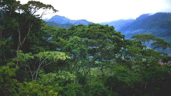 Bosque Indonesia