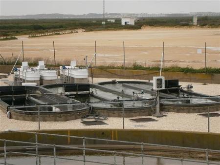 En Chiclana se desarrolla una planta para transformar aguas residuales en biocombustible de algas