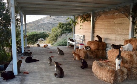 Trabaja en esta isla griega cuidando un santuario de gatos