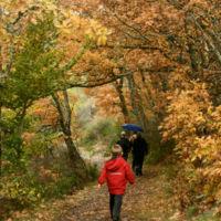 Citas para fotografiar el otoño: el hayedo de Tejera Negra en Guadalajara