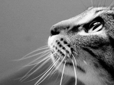 Los gatos se convierten en protagonistas de los foros de asistencia técnica (y no, no es broma)