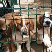 La Cámara de Diputados busca eliminar la comercialización de animales en sitios no regulados de México
