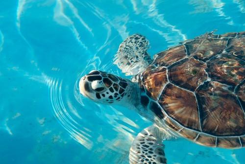Visitas y voluntariado en Cancún para proteger a las tortugas marinas