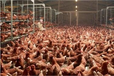Henk Wildschut, documentando fotográficamente el proceso de producción de los alimentos